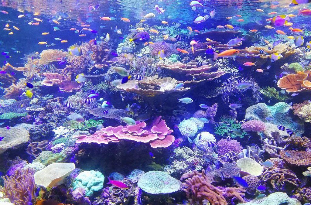 Día Mundial de los Océanos 2019